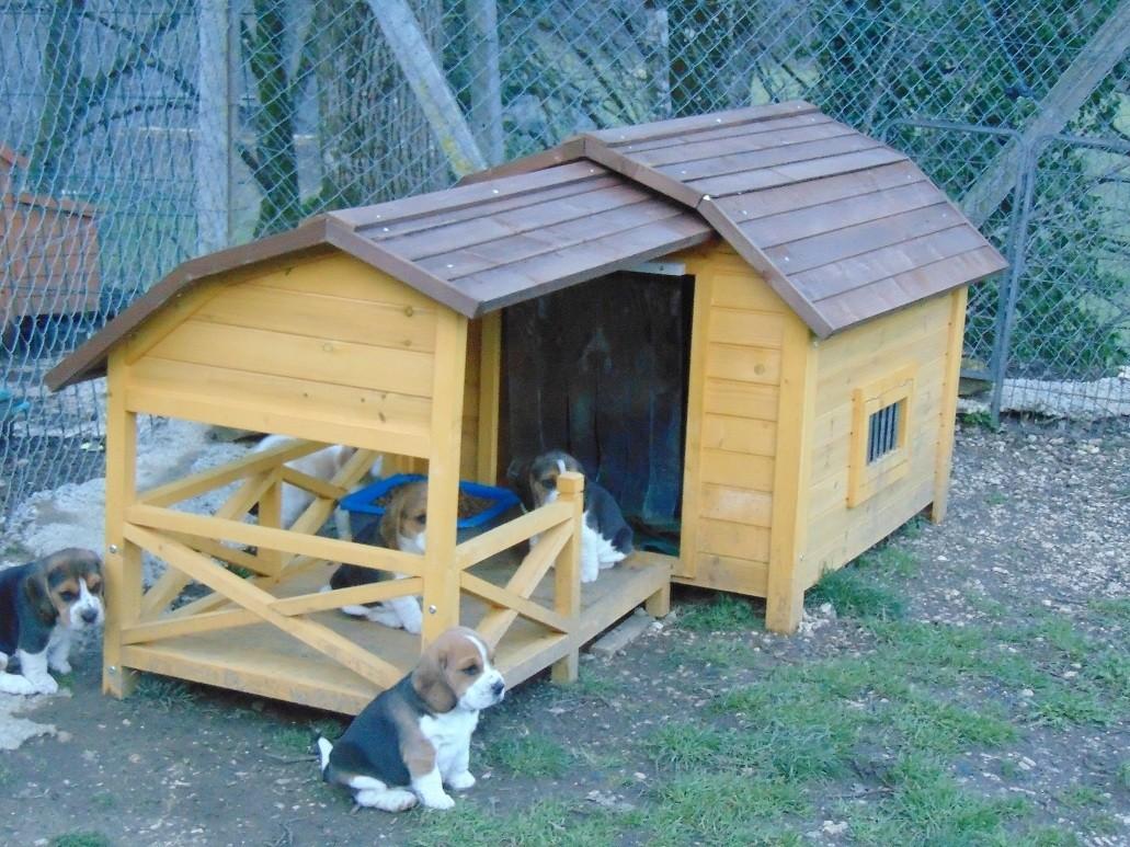 avis sur niche pour chien avec grande terrasse couverte. Black Bedroom Furniture Sets. Home Design Ideas