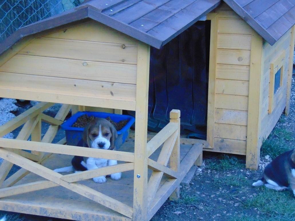 avis sur niche pour chien avec grande terrasse couverte zolia timeo. Black Bedroom Furniture Sets. Home Design Ideas
