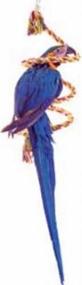 Corde à spirales à suspendre pour perroquets