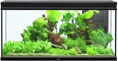 Aquarium Elegance expert noir éclairage LED
