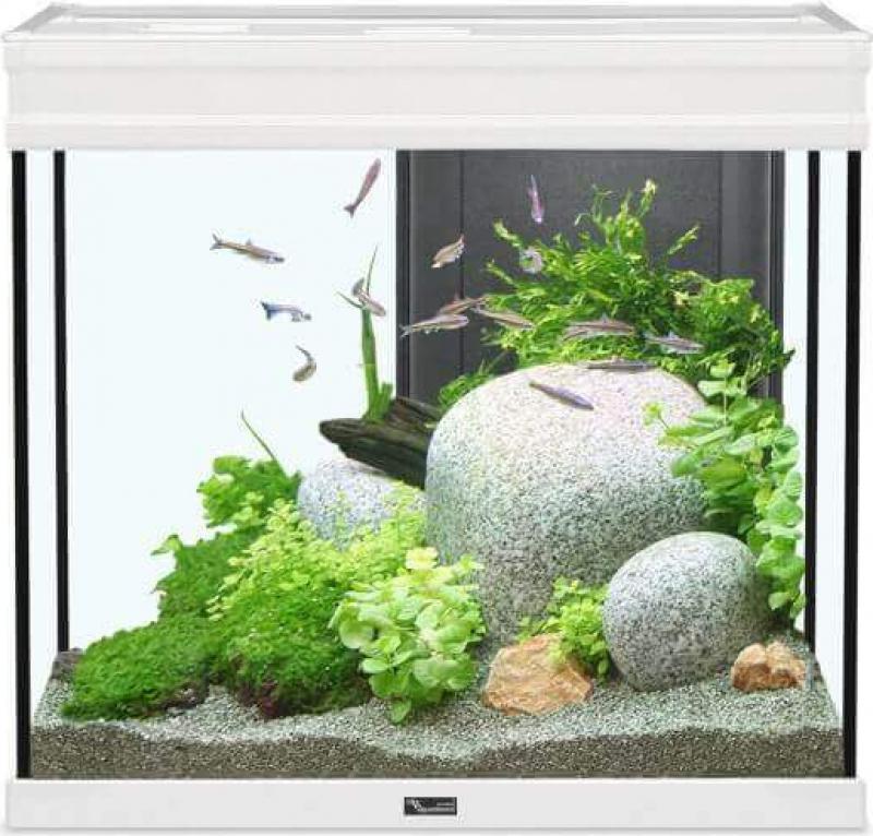 Aquarium Elegance expert blanc éclairage LED