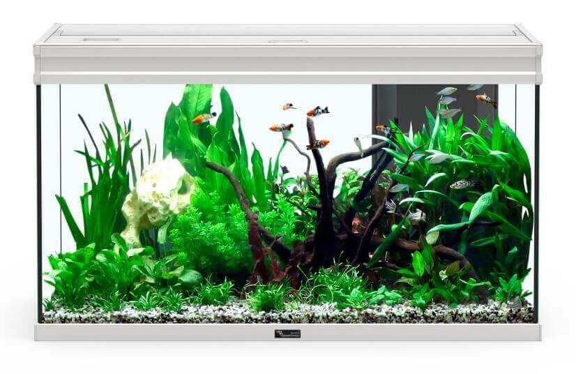 Aquarium Elegance expert inox éclairage LED_2