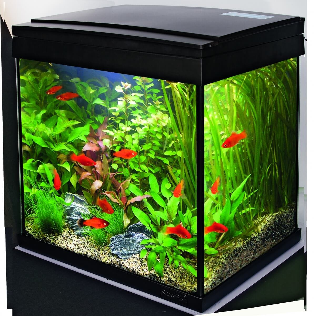 Aquarium pas cher fashion designs for Aquarium original pas cher