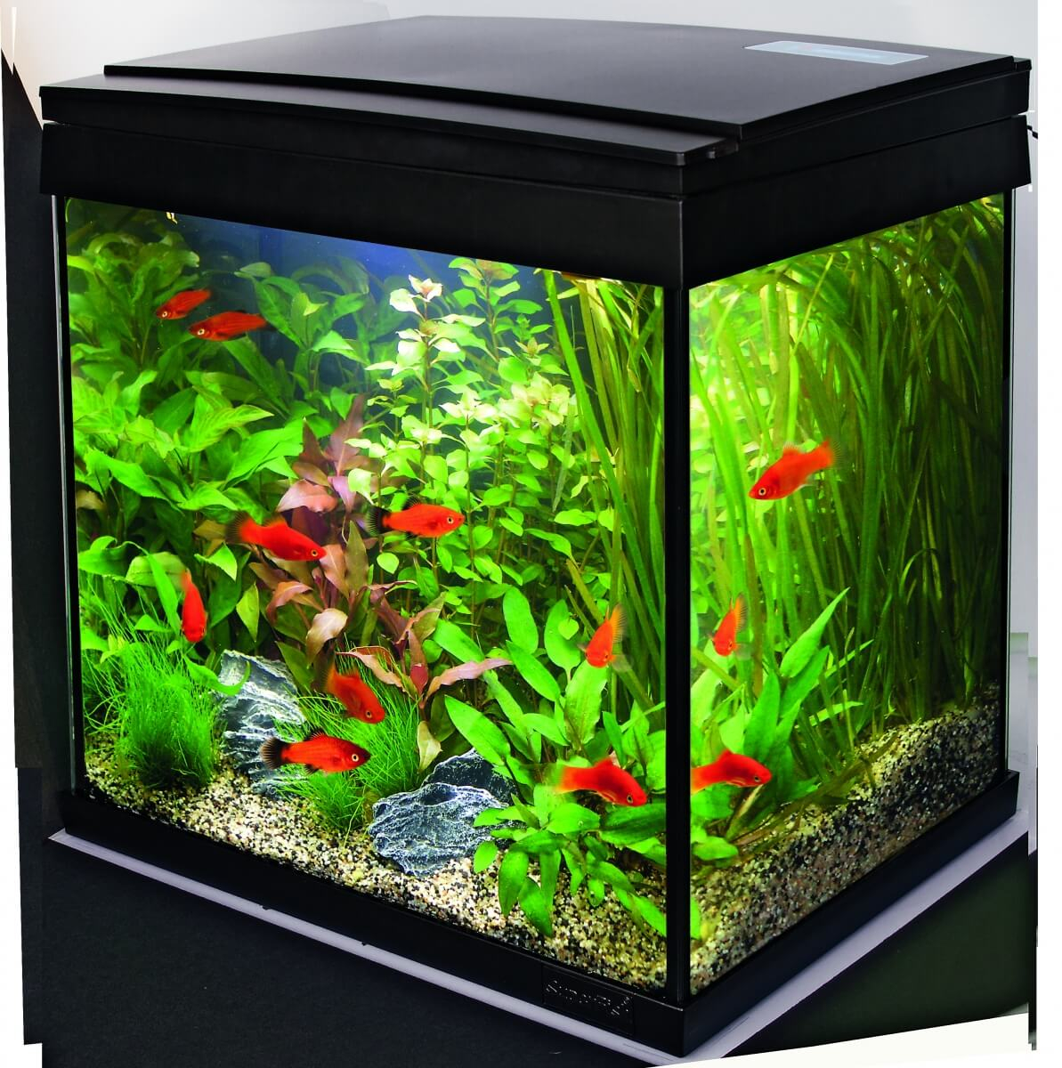 aquariums aqua 30 led tropical set aquarien m bel. Black Bedroom Furniture Sets. Home Design Ideas