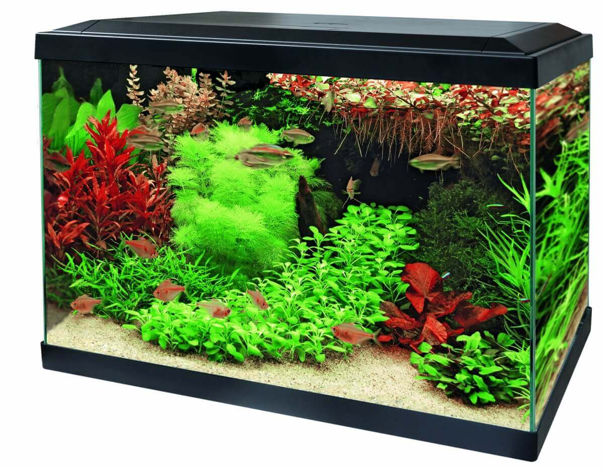 Aquariums Aqua 70 LED - Tropical Kit Blanc ou Noir_0