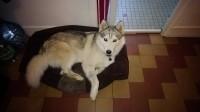 Coussin-ZOLIA-MOLY-pour-chien---81cm_de_audrey_6345300445d2b8b4dea2038.22920312