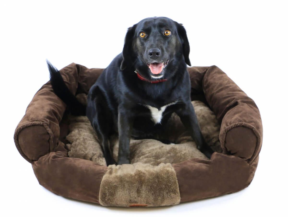 coussin canap zolia moly pour chien panier et corbeille. Black Bedroom Furniture Sets. Home Design Ideas