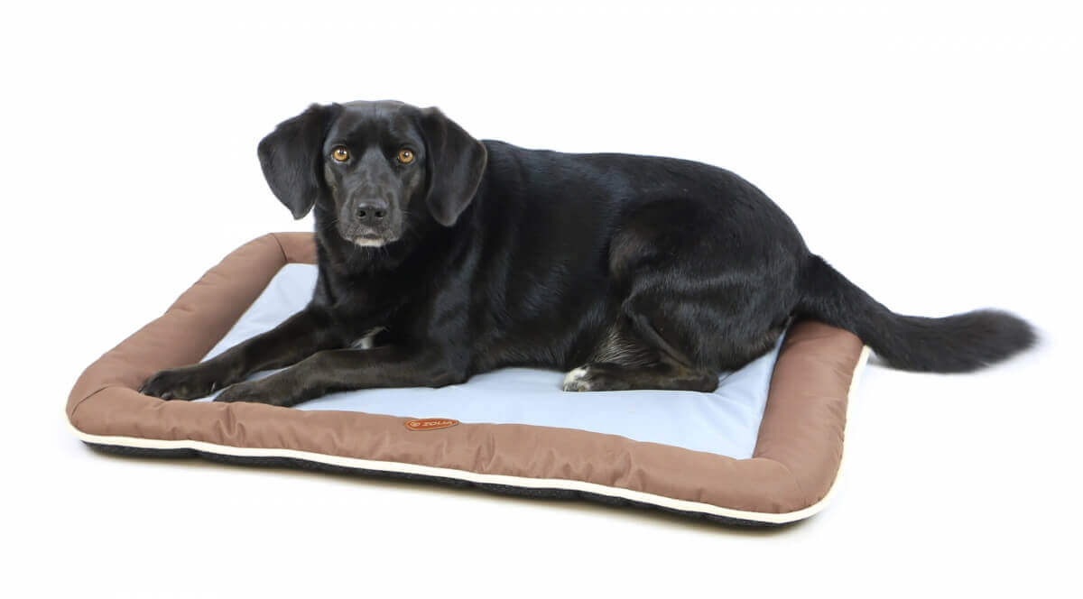 Coussin pour chien ZOLIA HOLLY_0