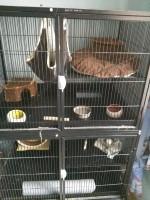 Cage-ZOLIA-FUNZY-pour-Furet-et-rongeurs---H160cm-_de_Jessica_9036958275c655a8709b822.88575271