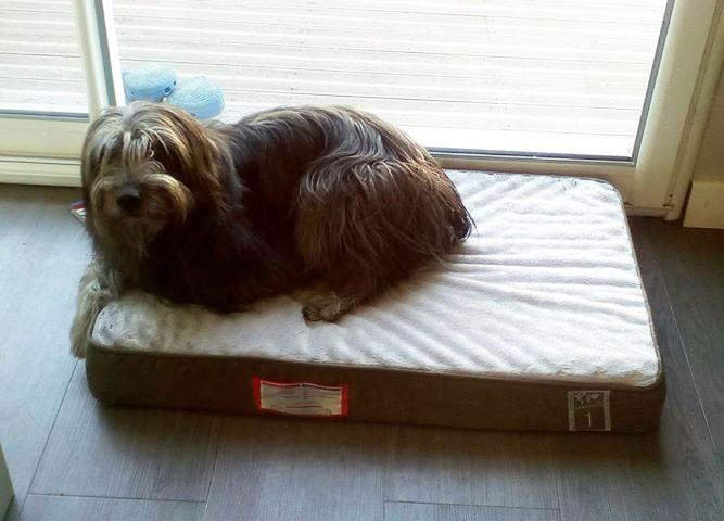 vital coussin m moire de forme pour chien best of all breeds coussin et tapis. Black Bedroom Furniture Sets. Home Design Ideas