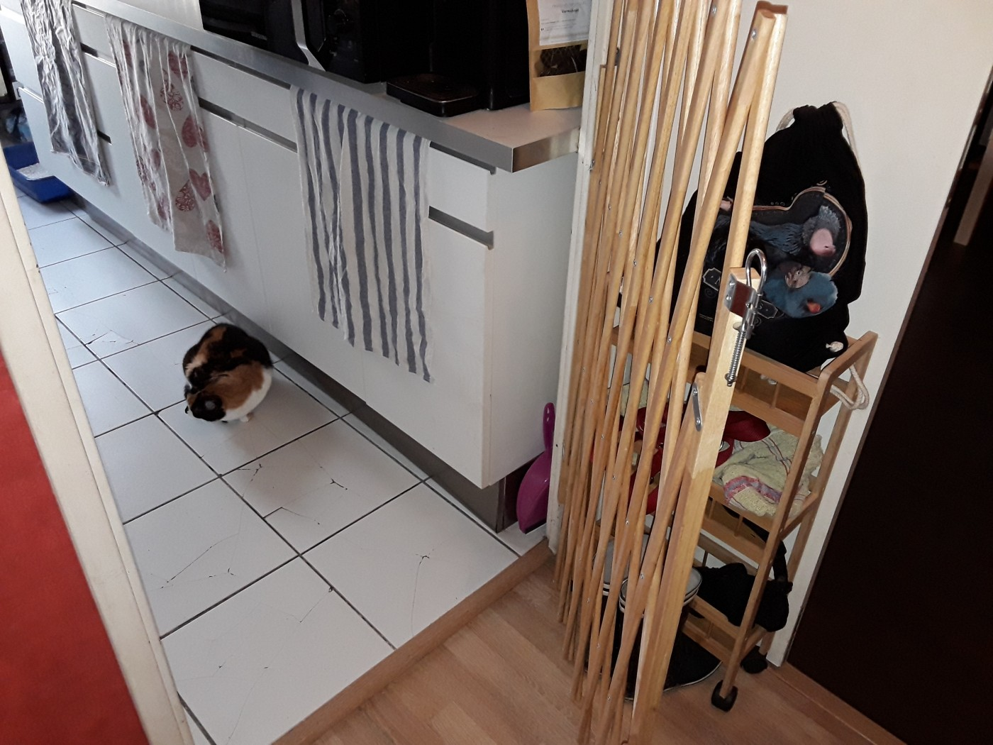 barriera per cani estensibile in legno verniciato stopfix