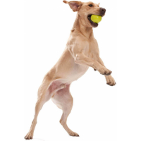 Jive - Balle chien Zogoflex (2)