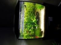 33780_Aquarium-Flex-FLUVAL-noir_de_DOMINIQUE_12215677015aeb5f59487b08.34153636
