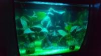 33780_Aquarium-Flex-FLUVAL-noir_de_Stephanie_10043913675b5ec5b35b8016.26244777