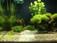 33780_Aquarium-Flex-FLUVAL_de_Olaf_3424257795978ee19497a59.46487043