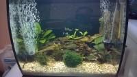 Aquarium-Flex-FLUVAL-noir_de_Emmanuel_19162430385af2ec41c13c32.48229543