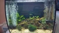 Aquarium-Flex-FLUVAL-noir_de_Emmanuel_3204954965af2ec36d77b18.37856519