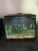 Aquarium-Flex-FLUVAL_de_Anne_1185803559eb2ea34db6e5.12488651
