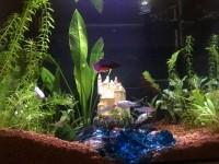 Aquarium-Flex-FLUVAL_de_Anne_121343835559eb2e5246ac34.37397147