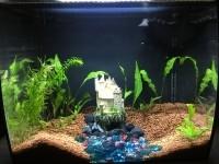 Aquarium-Flex-FLUVAL_de_Anne_143055935459eb2ee239dac6.26373700