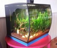 Aquarium-Flex-FLUVAL_de_Chris._17479188115a818e35978653.66596094