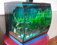 Aquarium-Flex-FLUVAL_de_Chris._6557873845a818e79449401.55367542