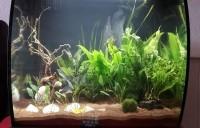 Aquarium-Flex-FLUVAL_de_Chris._8659926635a818ebc9b1ef2.12265113