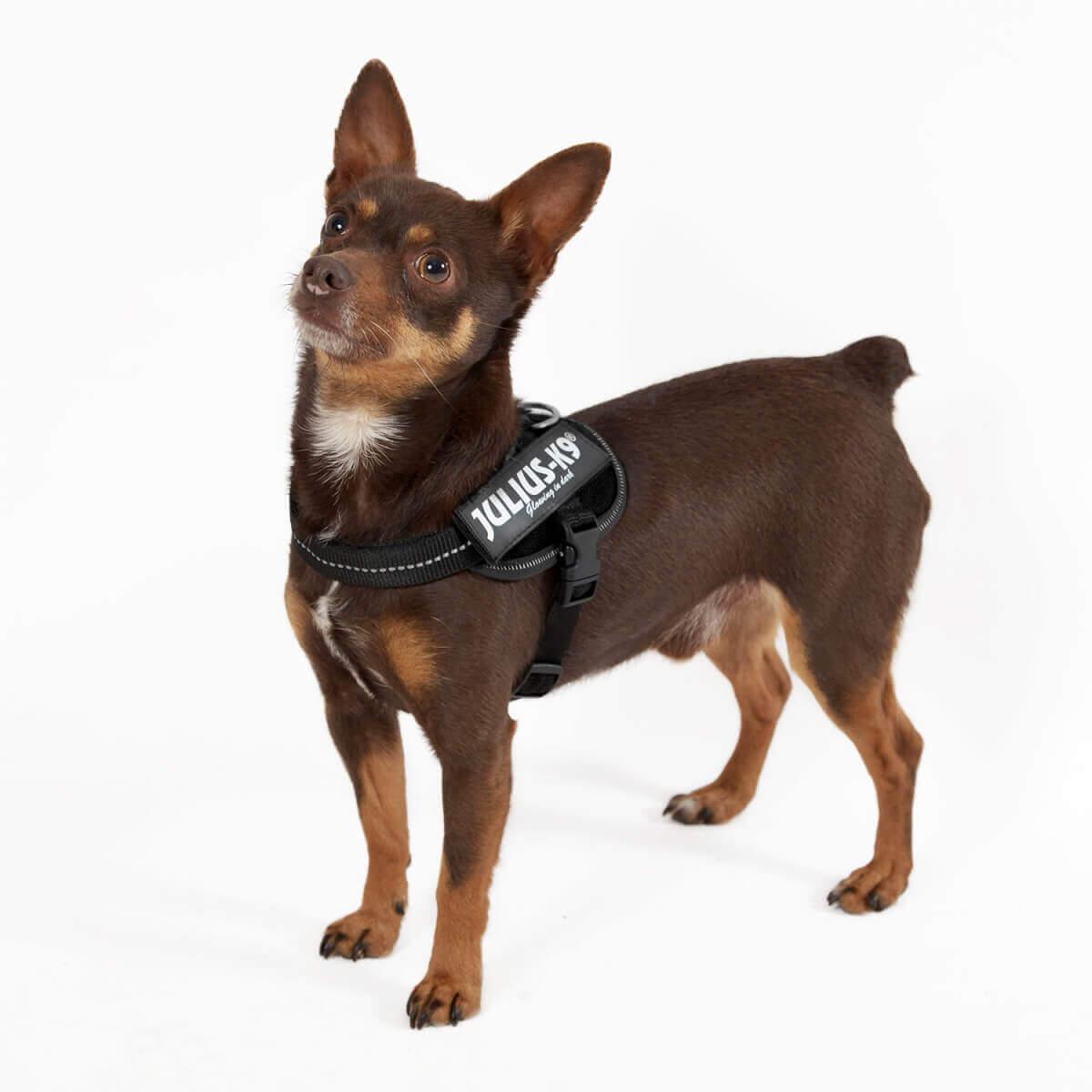 Harnais Power Julius-K9 IDC noir - Harnais pour chien