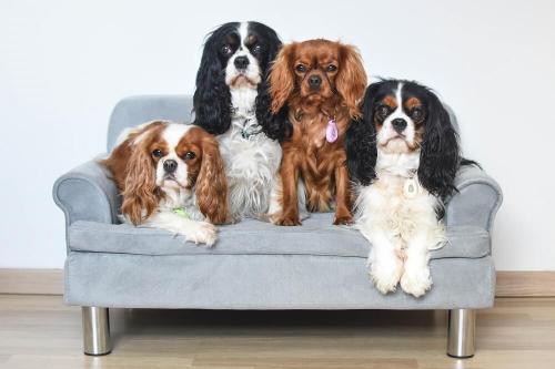 Canapé pour chien ZOLIA LILOE_3