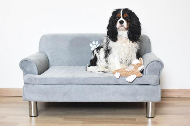 Canapé pour chien ZOLIA LILOE - L59cm