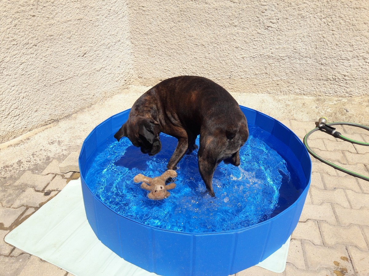 Avis sur piscine pour chien zolia oceadog 120cm for Piscine pour grand chien