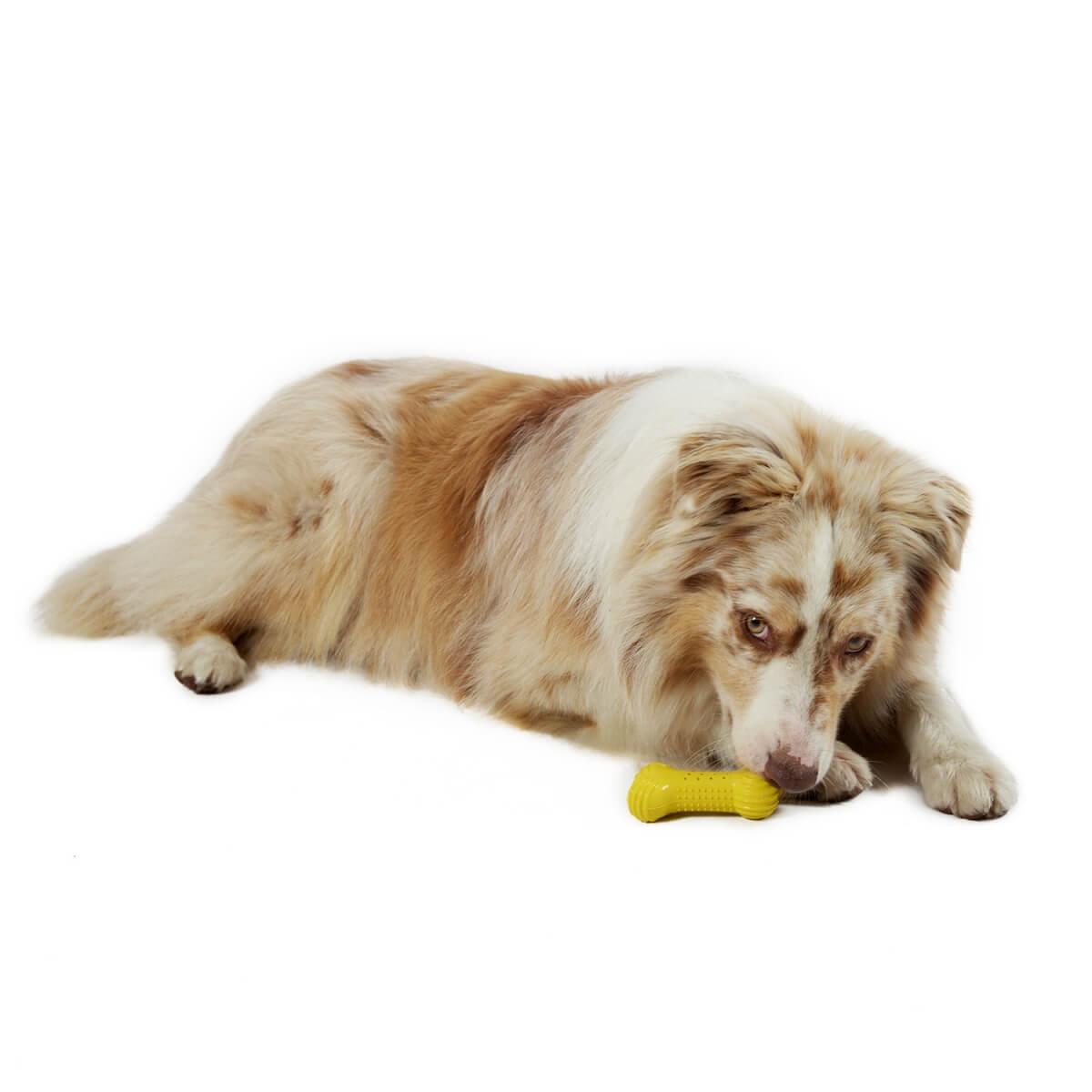 os rafra chissant color pour chien et chiot jouet pour chien. Black Bedroom Furniture Sets. Home Design Ideas