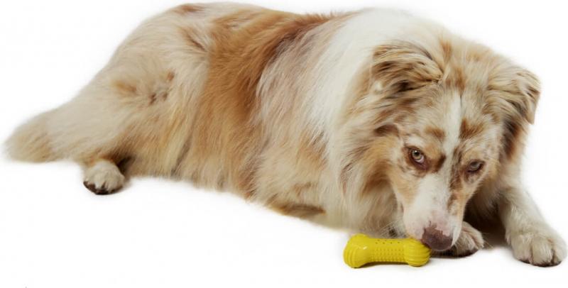 Os rafraîchissant coloré pour chien et chiot