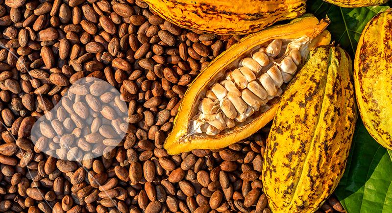 litiere likao quality clean au cacao