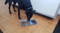 NESTOR-BIO-Croquettes-BIO-pour-chien-Moyennes-et-grandes-races_de_Alexia_20243406395c78f0e190c653.41768110
