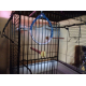 Cage-ZOLIA-Teoss-pour-oiseaux-exotiques-et-canaris---h61-cm-_de_MONIQUE_20817915035e5923a1c01a87.33071085