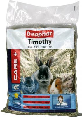 Timothy, foin de phléoles