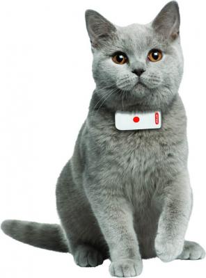 GPS pour chat MOOV