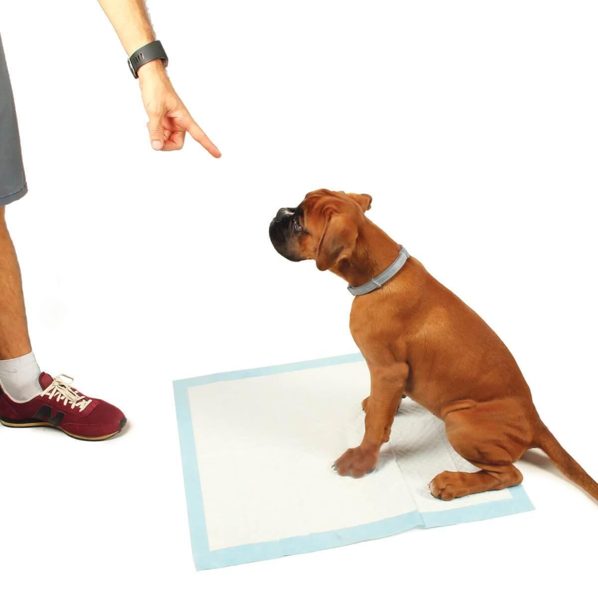 Tapis ducateur pup 39 pad grande absorption pour chien tapis ducateur - Tapis educateur proprete pour chien ...