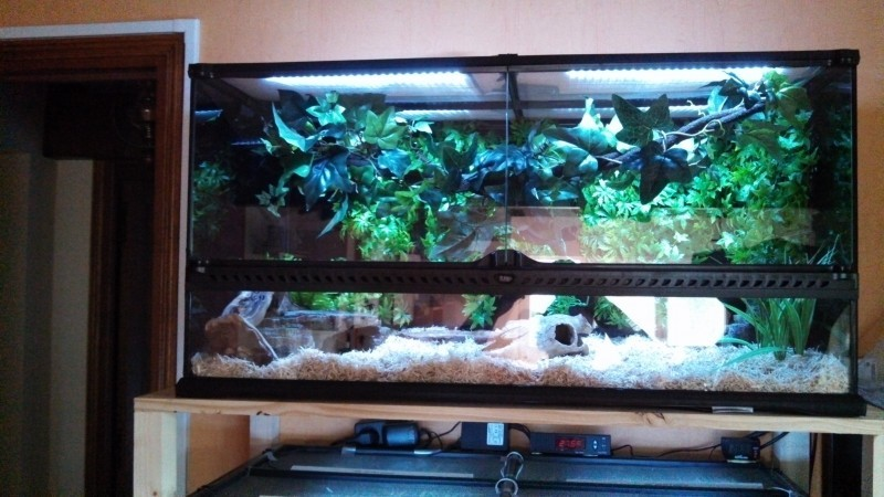 Reviews About Exo Terra Natural Terrarium Large Advanced Reptile