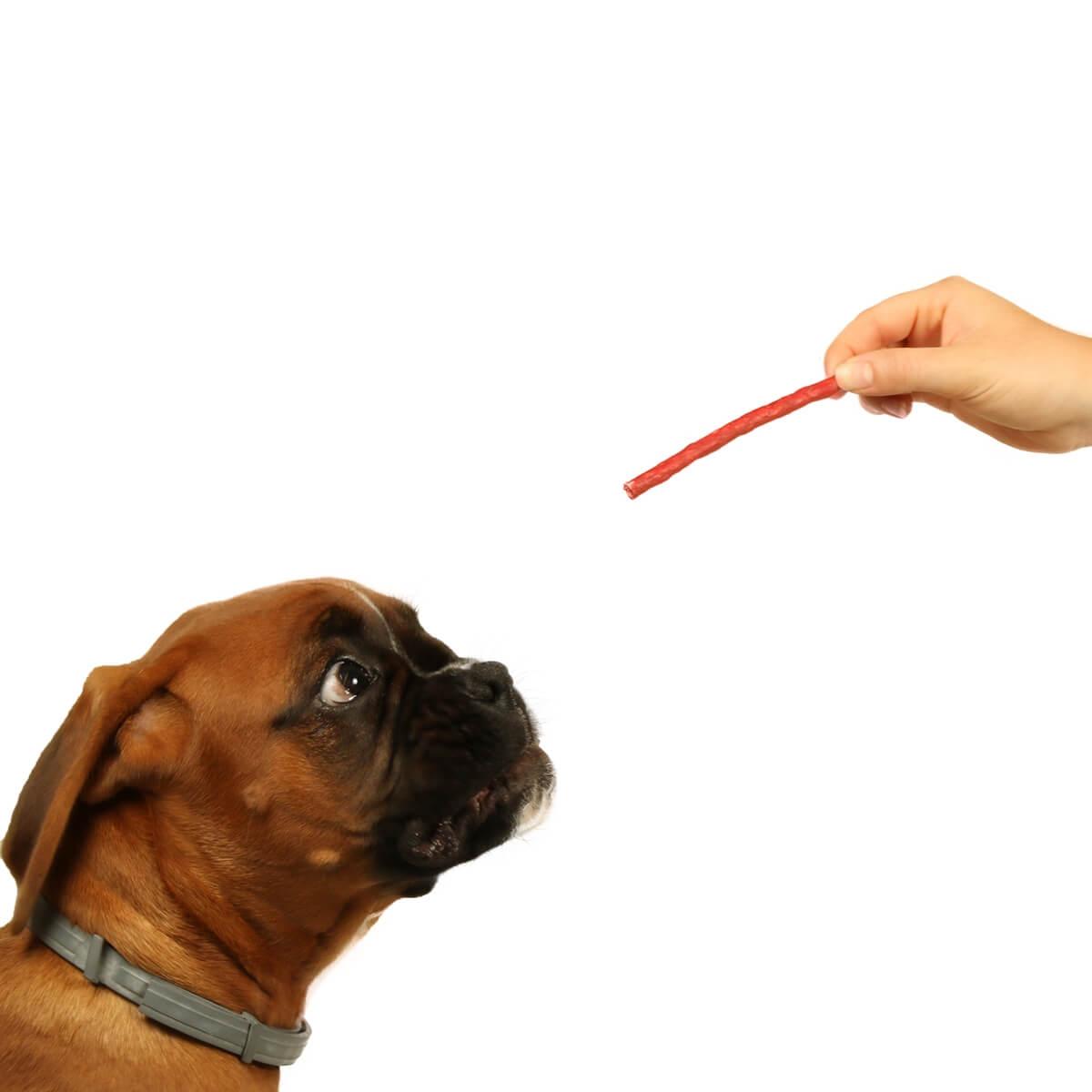 Friandises sticks de couleur DAILYS pour chiens