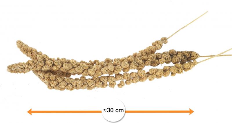 Iako yellow millet for birds