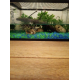 34915_SuperFish-Gravier-fluo-néon-pour-aquarium_de_MALIKA_1816772125f2ef62544cba0.48888054