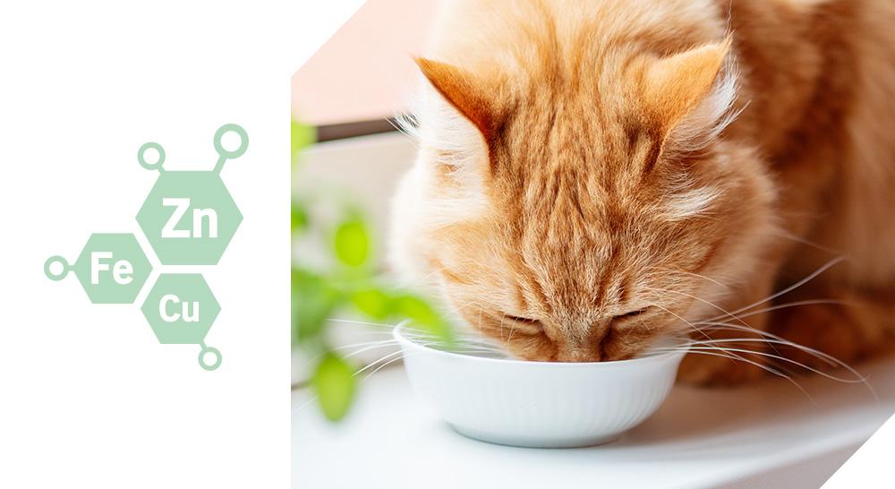 bi-nutrition mousses quality sens pour chats
