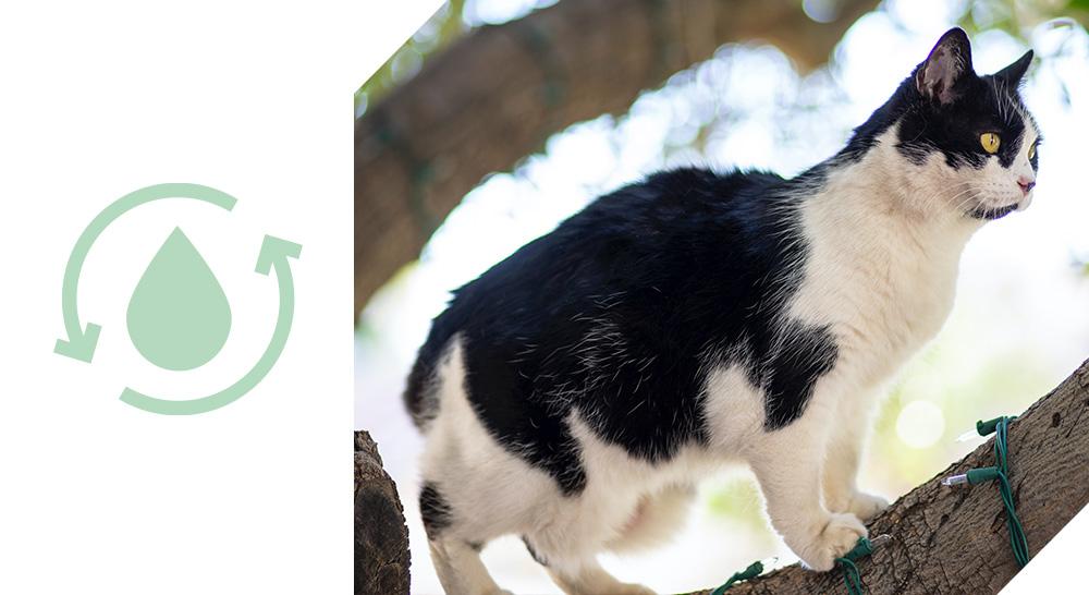 transit optimisé mousses quality sens pour chats