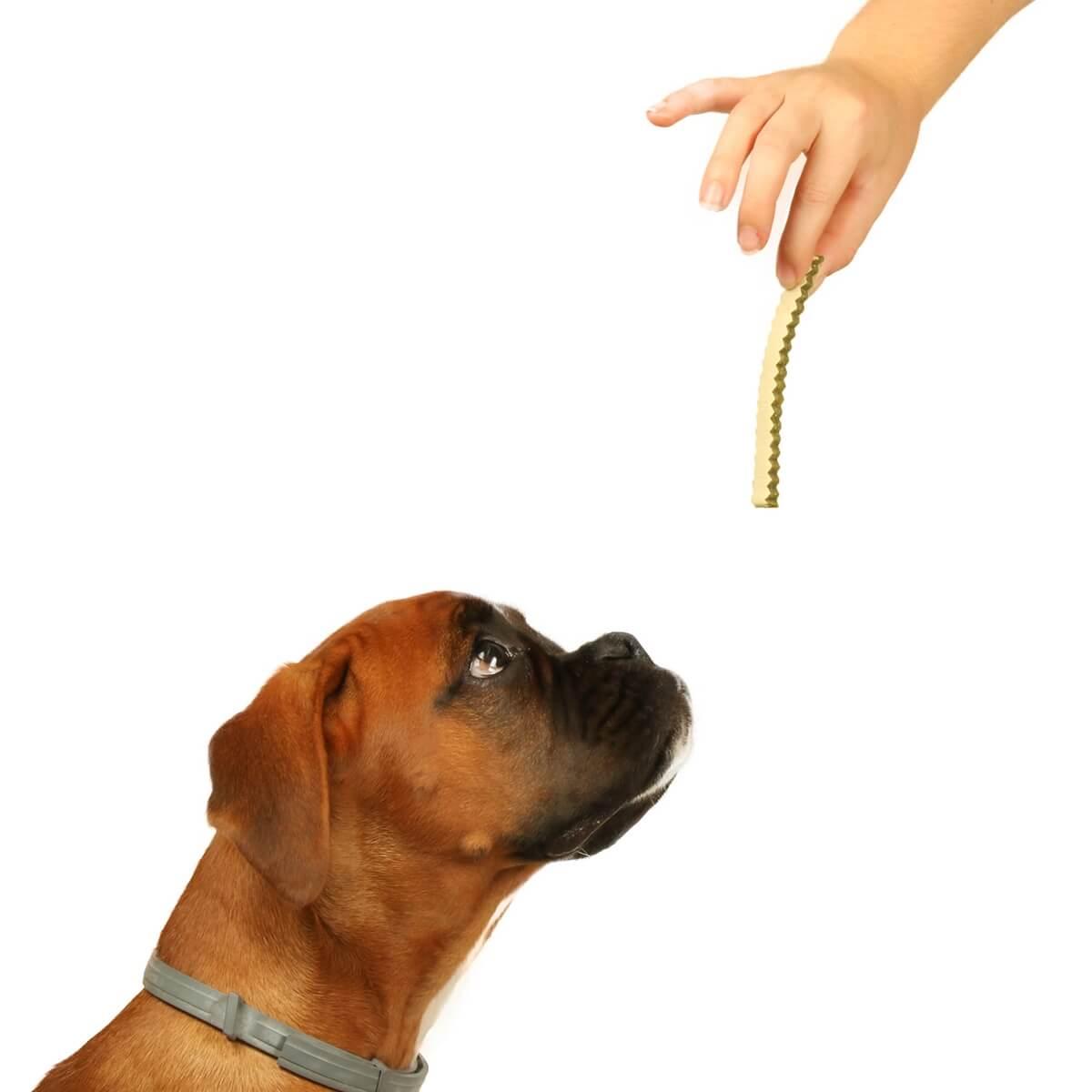 Friandises Poulet, Patate douce et Epinard  DAILYS pour chiens_2