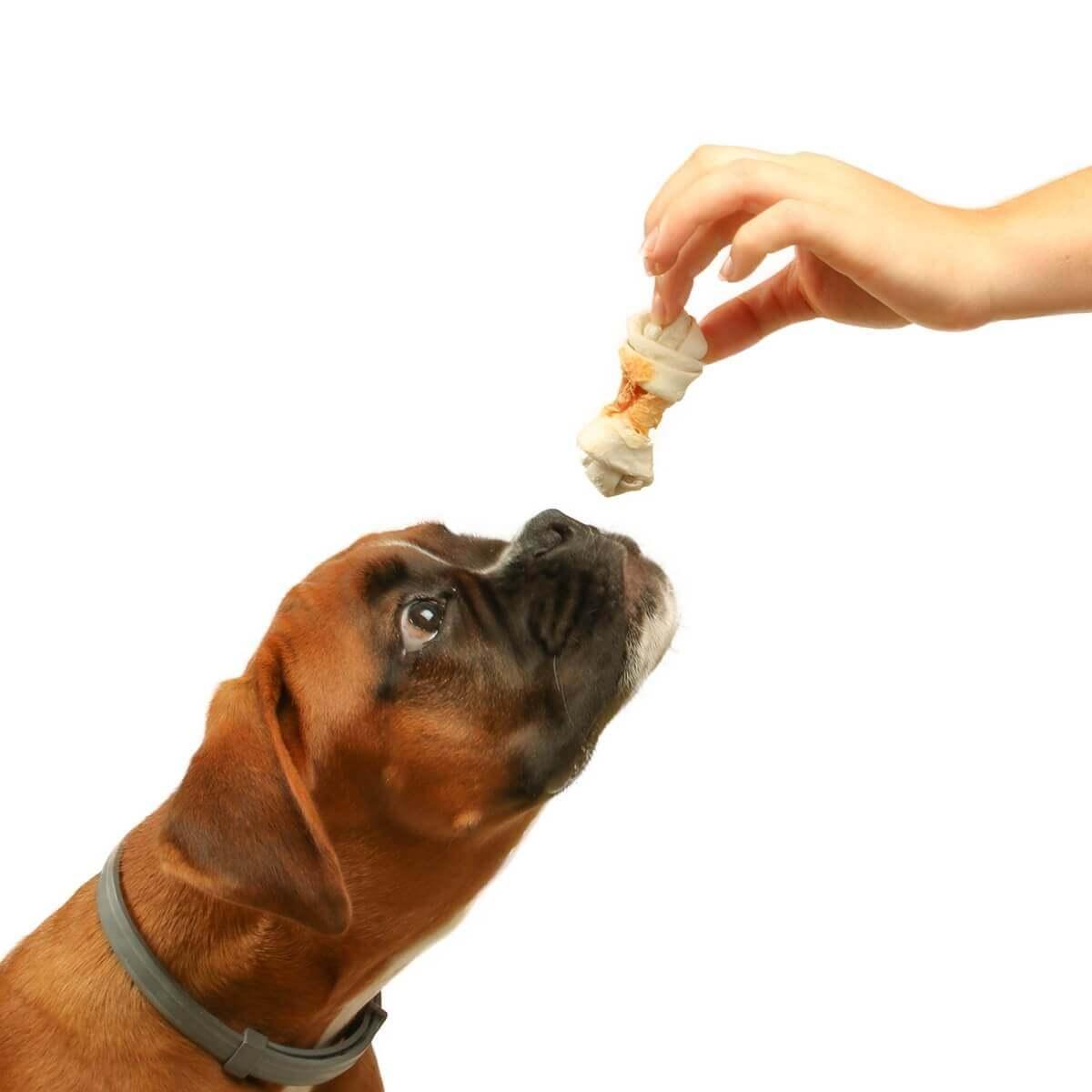 Os noué enroulé de Poulet DAILYS pour chiens_2