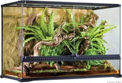 Natural Terrarium Large / Advanced Reptile Habitat