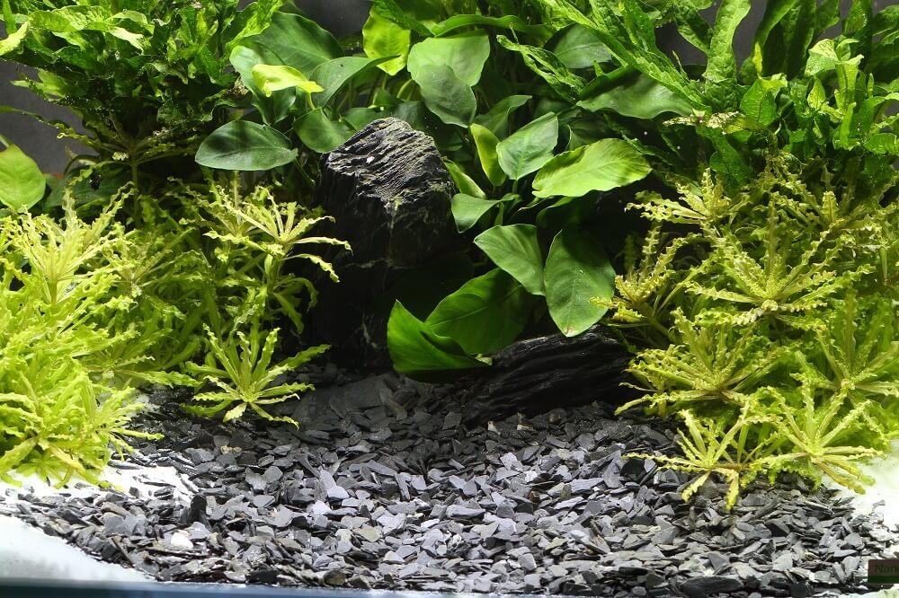 Gravier dennerle plantahunter baikal sable et gravier for Gravier pour aquarium