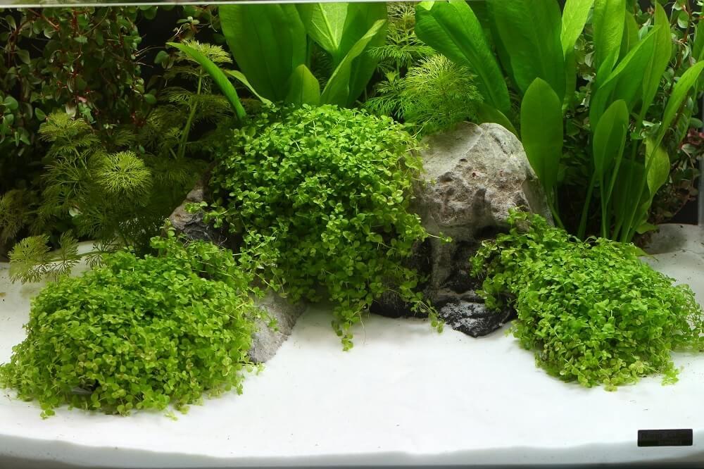 Gravier dennerle plantahunter beach sable et gravier for Gravier aquarium